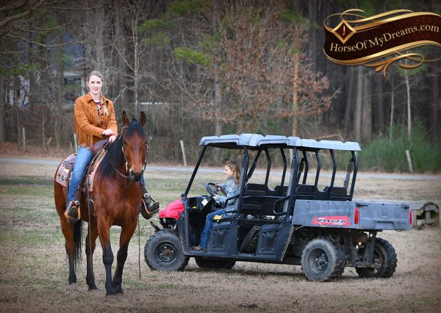 020-Chico-Bay-AQHA-Gelding-For-Sale