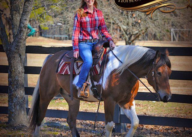 020-Henry-Reno-Paint-Draft-Cross-Gelding-Horse-Beginner-Trail-For-Sale