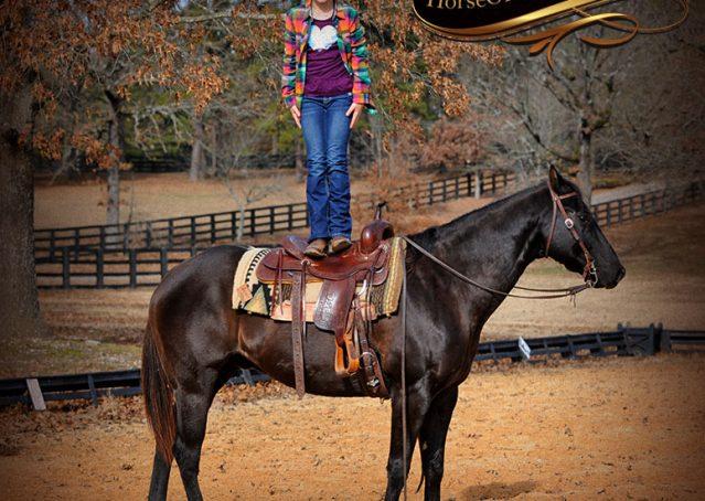 020-Onyx-Black-Quarter-Horse-Gelding-For-Sale
