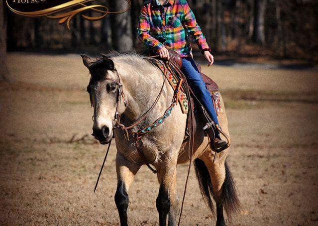 020-Timber-Buckskin-Quarter-Horse-Gelding-For-Sale-Trails-Family