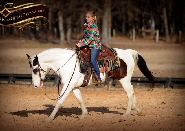 021-Bandit-APHA-Tri-Color-Paint-Gelding-For-Sale