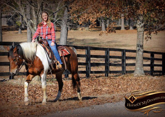 021-Henry-Reno-Paint-Draft-Cross-Gelding-Horse-Beginner-Trail-For-Sale
