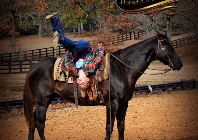 021-Onyx-Black-Quarter-Horse-Gelding-For-Sale