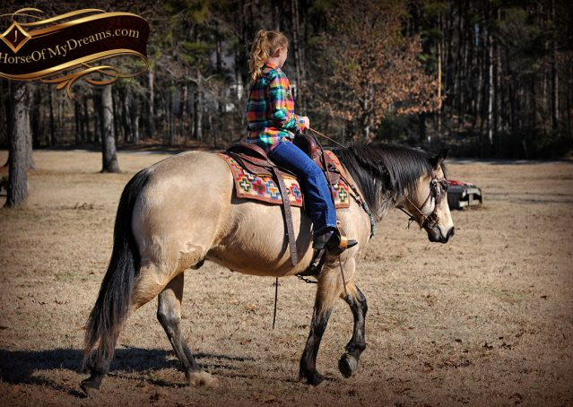 021-Timber-Buckskin-Quarter-Horse-Gelding-For-Sale-Trails-Family