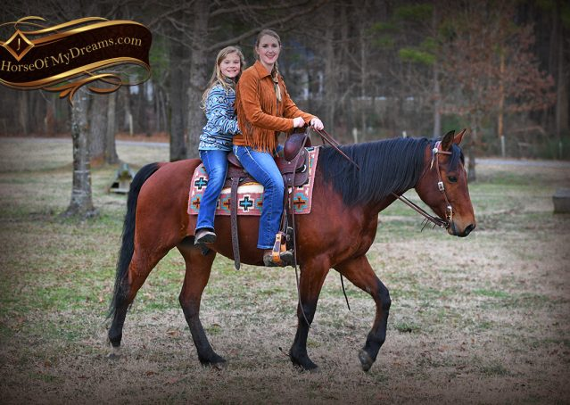 022-Chico-Bay-AQHA-Gelding-For-Sale