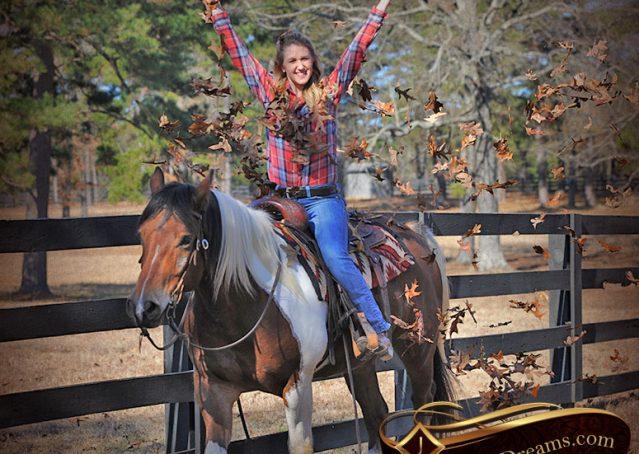 022-Henry-Reno-Paint-Draft-Cross-Gelding-Horse-Beginner-Trail-For-Sale