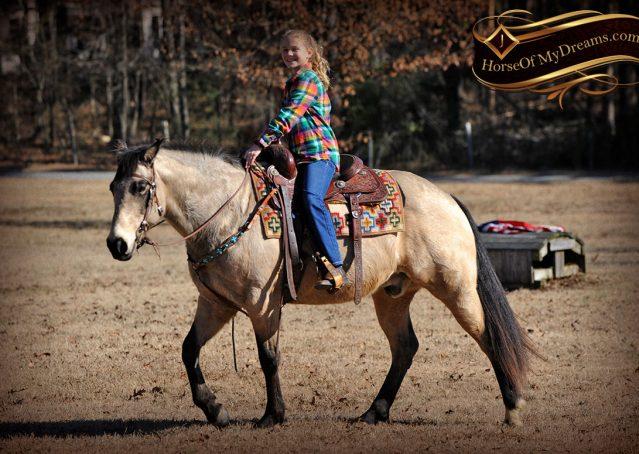 022-Timber-Buckskin-Quarter-Horse-Gelding-For-Sale-Trails-Family