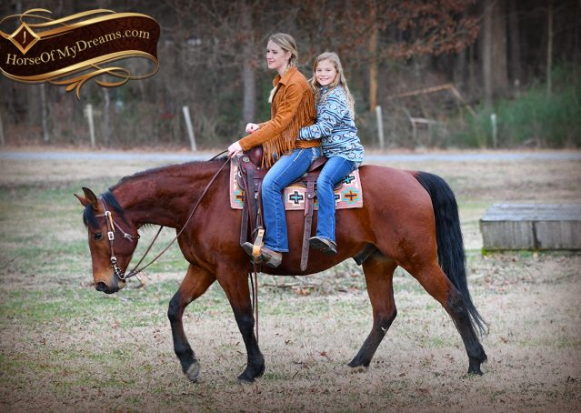 023-Chico-Bay-AQHA-Gelding-For-Sale