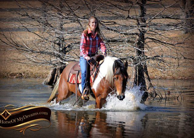 023-Henry-Reno-Paint-Draft-Cross-Gelding-Horse-Beginner-Trail-For-Sale