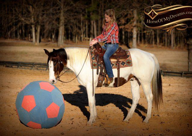 023-Jose-Tri-Color-APHA-Gelding-For-Sale-Kids-Trail-Family-Beginner