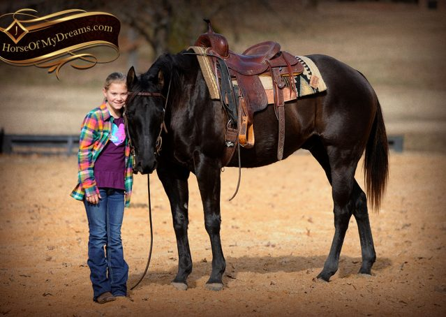 023-Onyx-Black-Quarter-Horse-Gelding-For-Sale