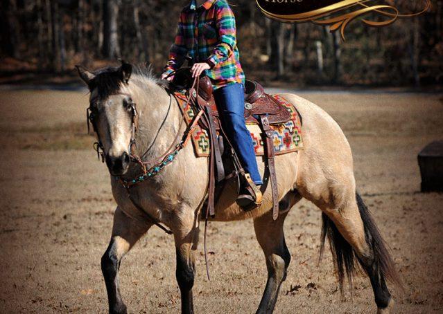 023-Timber-Buckskin-Quarter-Horse-Gelding-For-Sale-Trails-Family