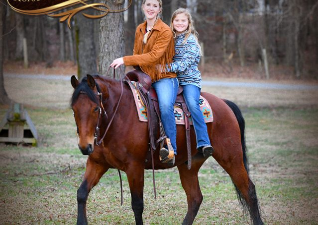 024-Chico-Bay-AQHA-Gelding-For-Sale