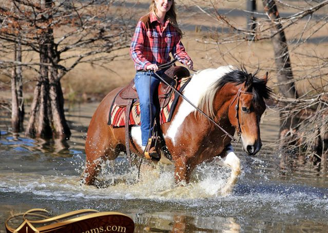 024-Henry-Reno-Paint-Draft-Cross-Gelding-Horse-Beginner-Trail-For-Sale