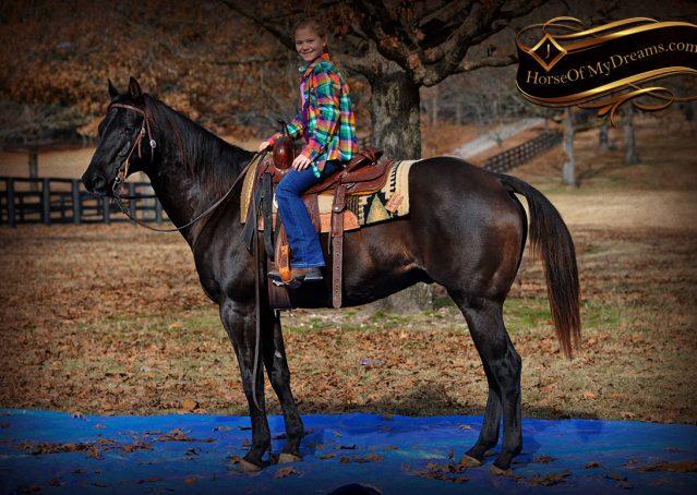 024-Onyx-Black-Quarter-Horse-Gelding-For-Sale