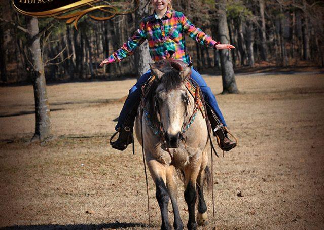 024-Timber-Buckskin-Quarter-Horse-Gelding-For-Sale-Trails-Family