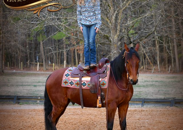 025-Chico-Bay-AQHA-Gelding-For-Sale