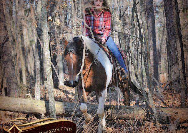 025-Henry-Reno-Paint-Draft-Cross-Gelding-Horse-Beginner-Trail-For-Sale