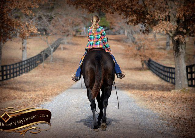 025-Onyx-Black-Quarter-Horse-Gelding-For-Sale
