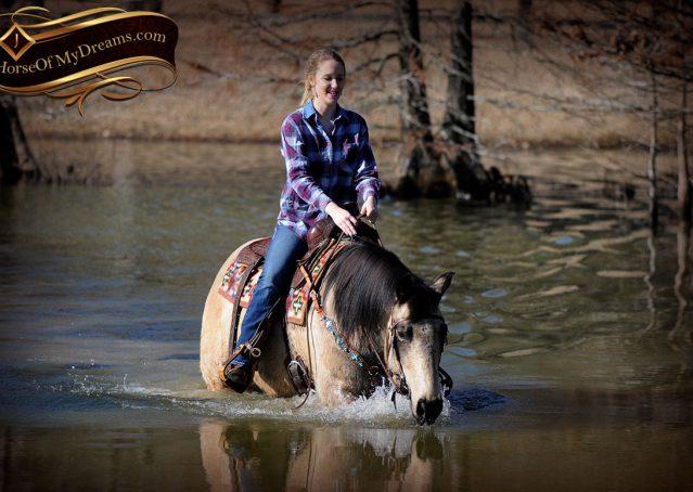 025-Timber-Buckskin-Quarter-Horse-Gelding-For-Sale-Trails-Family