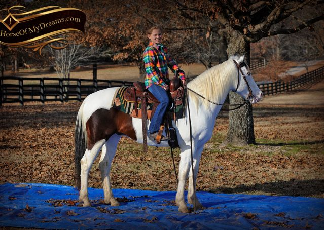 026-Bandit-APHA-Tri-Color-Paint-Gelding-For-Sale