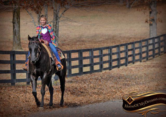 026-Onyx-Black-Quarter-Horse-Gelding-For-Sale