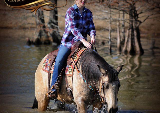 026-Timber-Buckskin-Quarter-Horse-Gelding-For-Sale-Trails-Family