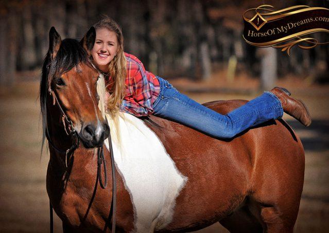029-Henry-Reno-Paint-Draft-Cross-Gelding-Horse-Beginner-Trail-For-Sale