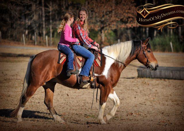 030-Henry-Reno-Paint-Draft-Cross-Gelding-Horse-Beginner-Trail-For-Sale