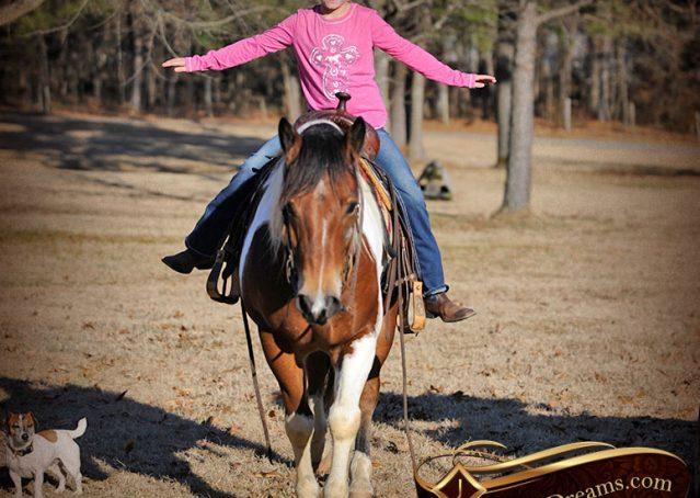 034-Henry-Reno-Paint-Draft-Cross-Gelding-Horse-Beginner-Trail-For-Sale