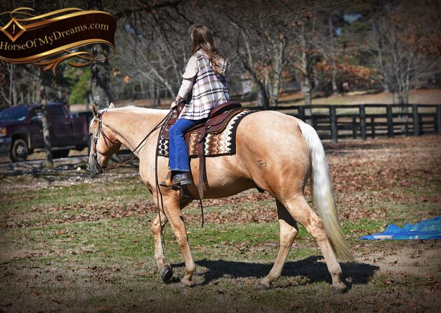 001-Odie-AQHA-Palomino-Gelding-For-Sale