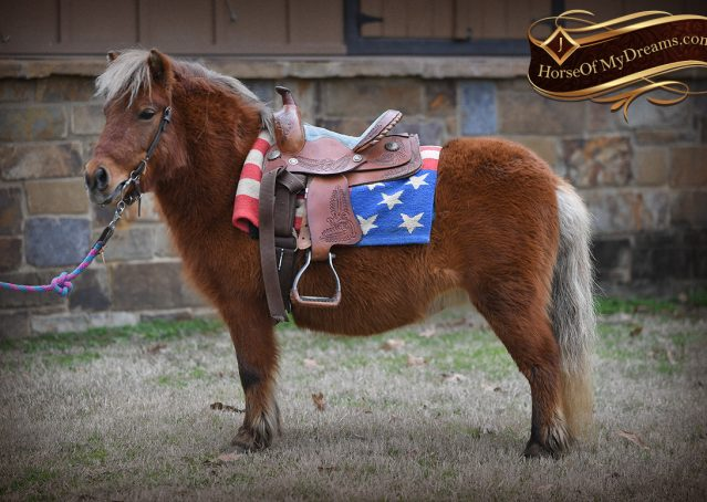 001-Ruby3-Chestnut-Pony-Mare