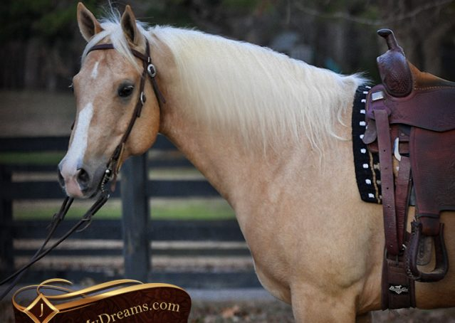 001-Shiner-Golden-Palomino-AQHA-NRHA-Reiner-Reining-Quarter-Horse-Gelding-For-Sale