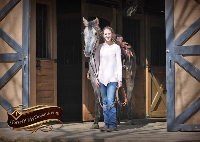 001-Sterling-Grey-AQHA-Quarter-Horse-trail-family-bombproof-for-sale