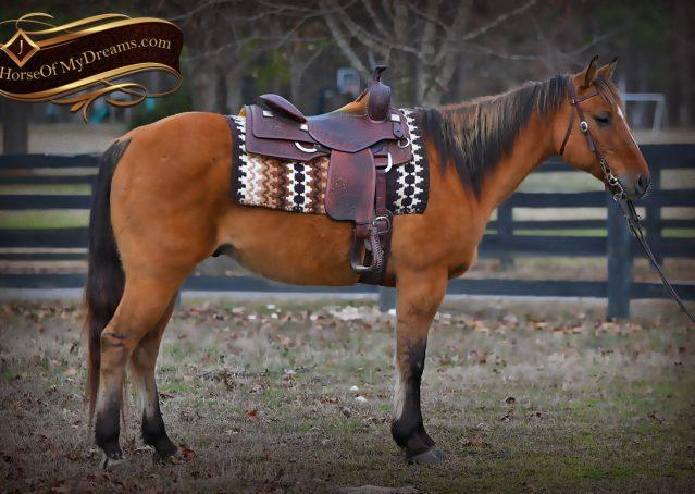 002-Phoenix-Buckskin-Dun-Quarter-Horse=Gelding-For-Sale