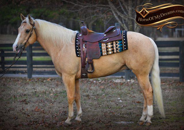002-Shiner-Golden-Palomino-AQHA-NRHA-Reiner-Reining-Quarter-Horse-Gelding-For-Sale