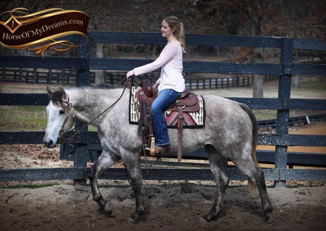 002-Sterling-Grey-AQHA-Quarter-Horse-trail-family-bombproof-for-sale