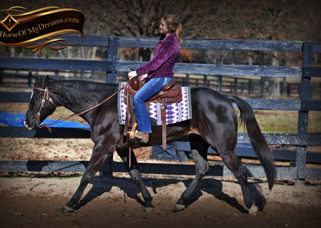 002-Tedd4-Black-AQHA-Gelding-For-Sale