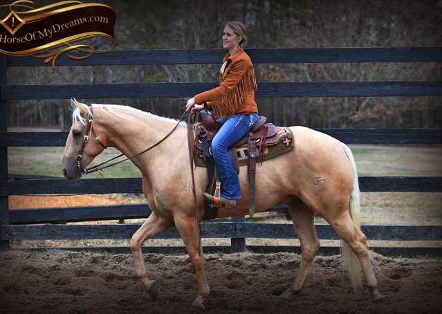 003-Odie-AQHA-Palomino-Gelding-For-Sale