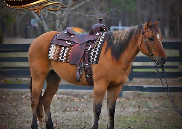 003-Phoenix-Buckskin-Dun-Quarter-Horse=Gelding-For-Sale