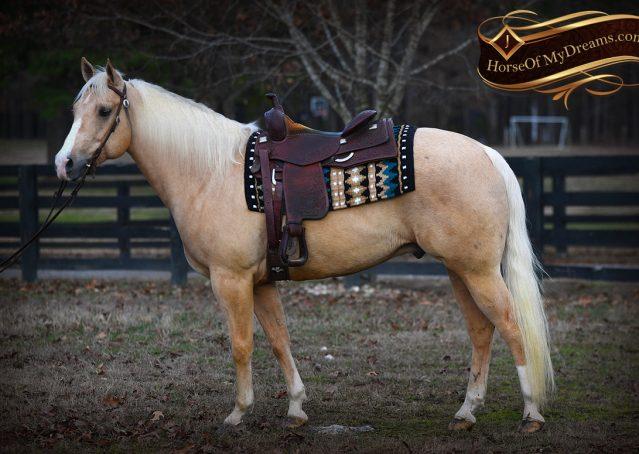 003-Shiner-Golden-Palomino-AQHA-NRHA-Reiner-Reining-Quarter-Horse-Gelding-For-Sale