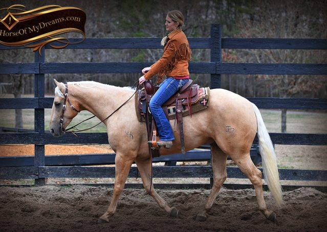 004-Odie-AQHA-Palomino-Gelding-For-Sale