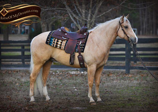 004-Shiner-Golden-Palomino-AQHA-NRHA-Reiner-Reining-Quarter-Horse-Gelding-For-Sale