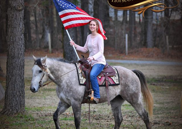 004-Sterling-Grey-AQHA-Quarter-Horse-trail-family-bombproof-for-sale