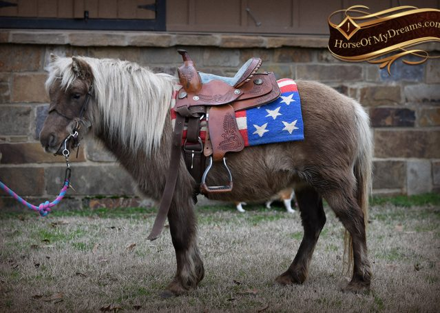 004-Sugar-Silver-Dapple-Pony-Mare-For-Sale