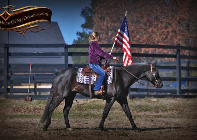 004-Tedd4-Black-AQHA-Gelding-For-Sale