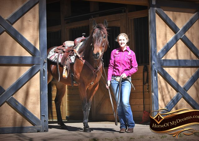 005-Cash-Bay-AQHA-gelding-for-sale