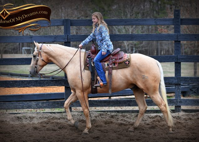 005-Odie-AQHA-Palomino-Gelding-For-Sale
