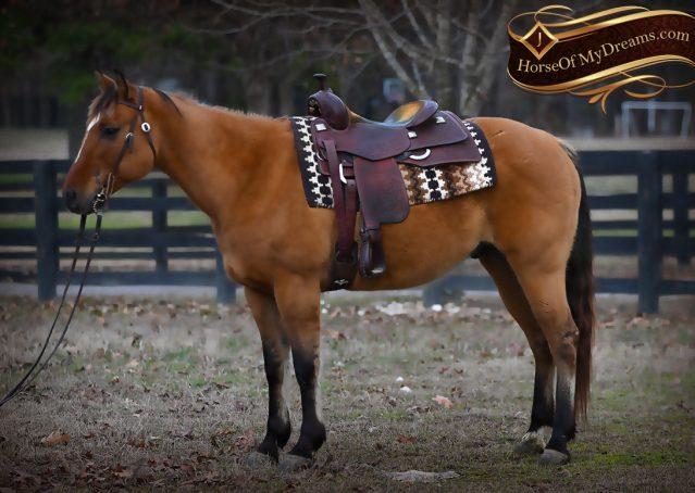005-Phoenix-Buckskin-Dun-Quarter-Horse=Gelding-For-Sale