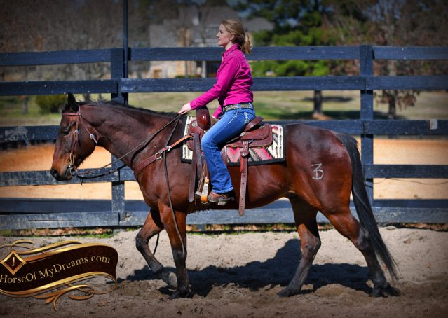 006-Cash-Bay-AQHA-gelding-for-sale